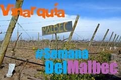 #SemanaDelMalbec Malbec por todo el país