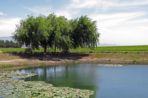 california vineyard carmel soledad wrathwines