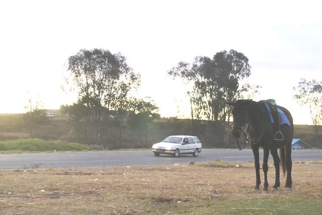 cheval et voiture