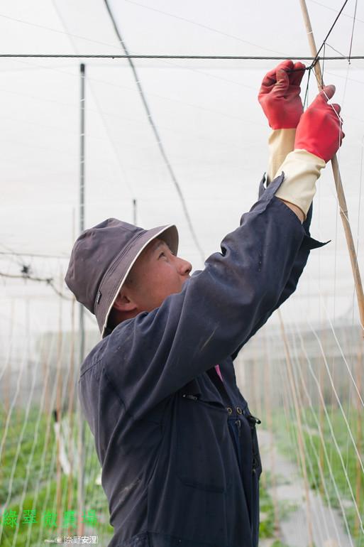 綠翠微農場--無毒美濃瓜 (4)