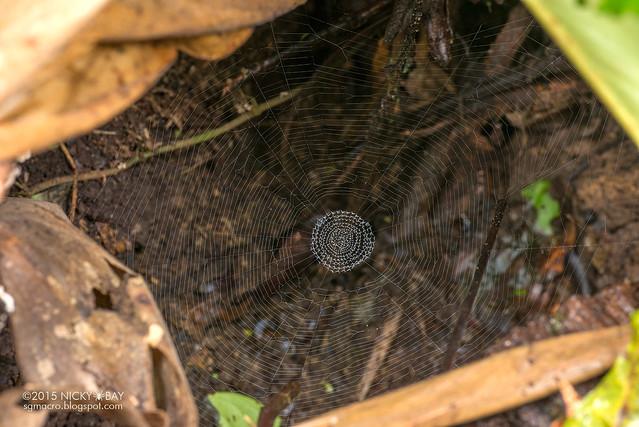 Unknown spider web - DSC_4148