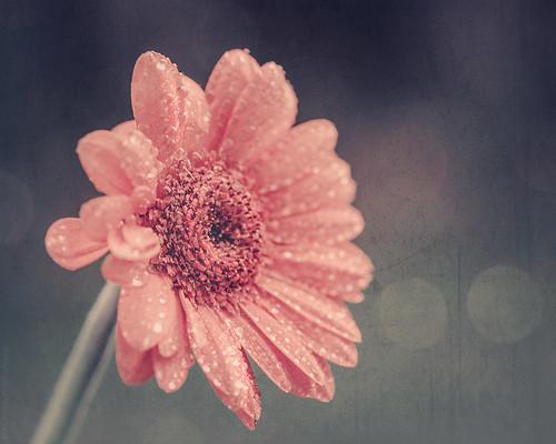 Summer rain // 13 07 15
