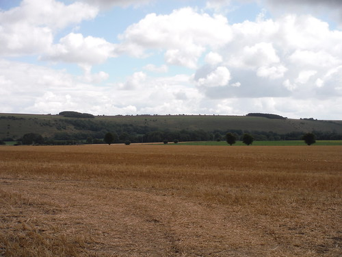 Swallowcliffe Down (II)