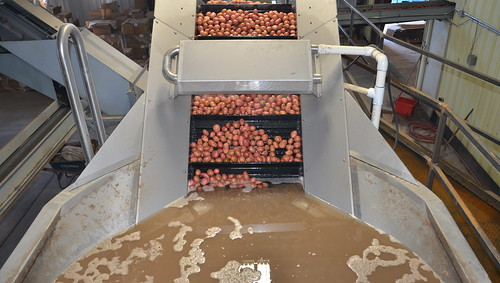 A potato cleaning station