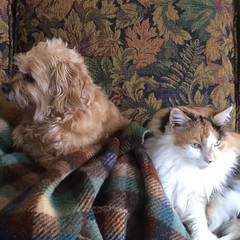 Maybe the little monsters missed each other. They'll never admit it. #myoldkentuckyhome, #dogsofinsta, #catsofinsta
