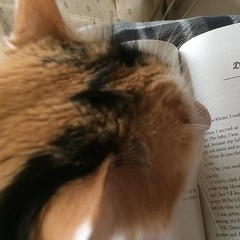 So glad to have this little monster blocking my book again. #catsofinstagram, #springbreakisbooks, #funreading