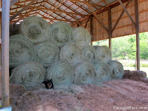 (30-5) It takes a LOT less work to move round bales into the barn, which is why we crossed over - FarmgirlFare.com