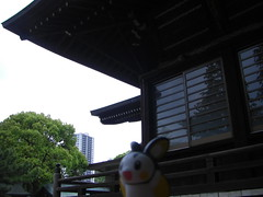 Emolga in Ichikawa, Chiba 12 (Katsushika Hachimangu Shrine)