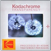 Ye Old Kodachrome ~ Dandelion Mugshot