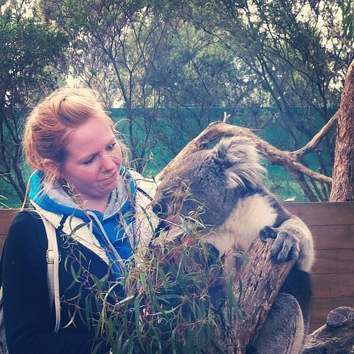 Having a hug with a koala