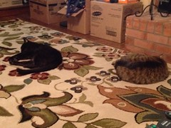 Cats testing new rug