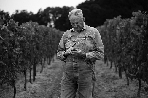 Dad Texting in the Vineyard | by jamesfischer