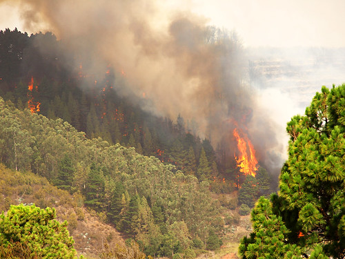 Forest Fire Tenerife