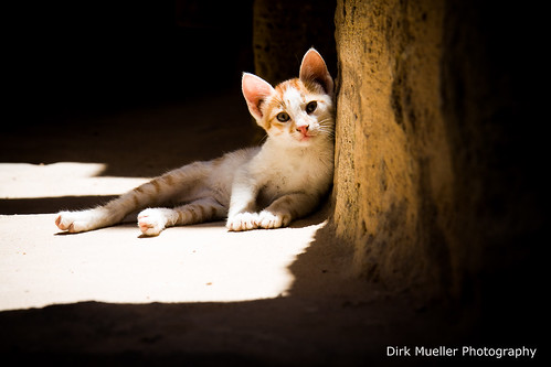 Relaxing In The Sun by Dirk Mueller Photography