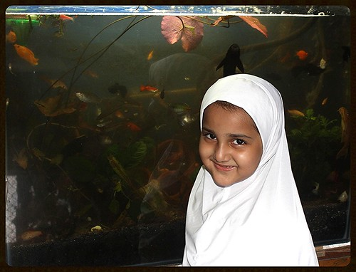 Marziyas Fish Tank by firoze shakir photographerno1