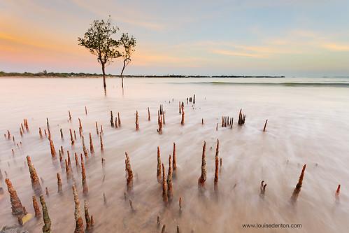 Down amongst the mangroves