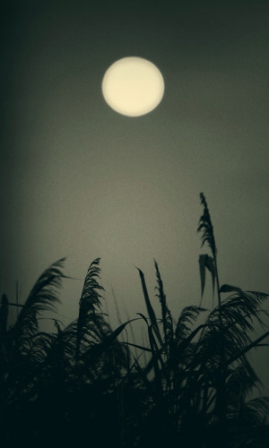 marsh moon by lucy.loomis
