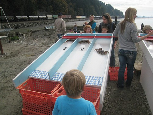 Crab Races at Taylor Shellfish