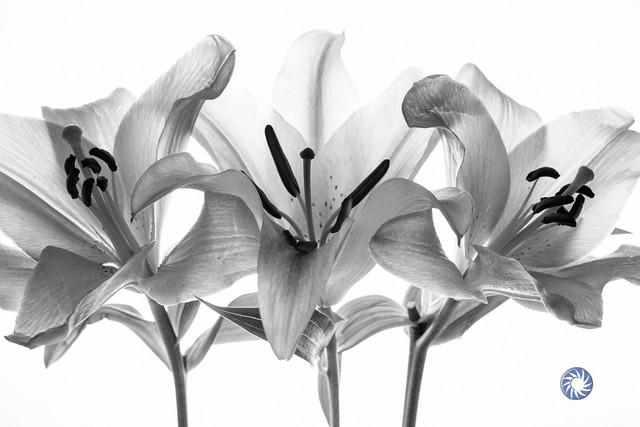 Flowers by Amanda Mueller