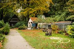 Arboretum in Autumn