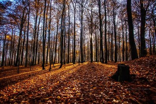 november autumn trees shadow tree nature colors leaves norway norge leaf natur nopeople autumncolors tre beech høst larvik vestfold beautyinnature beechforest bøkeskogen høstfarger bøk autumnphotography