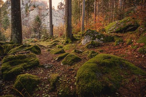 Nel bosco..........