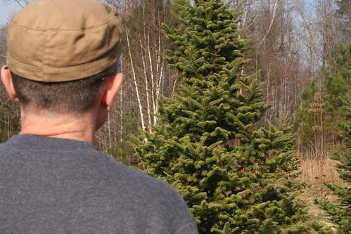 Tree2013 (11)