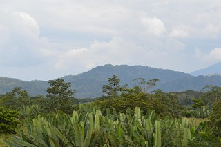 Jungle Mountains