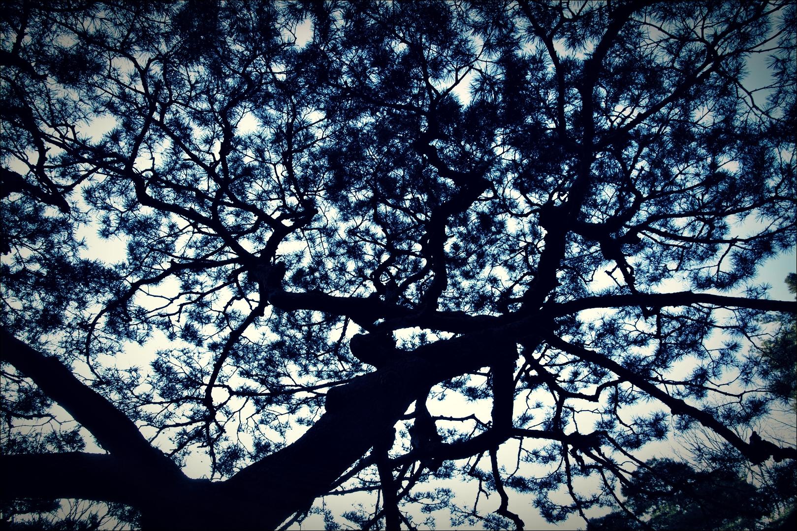 소나무-'부암동 석파정'