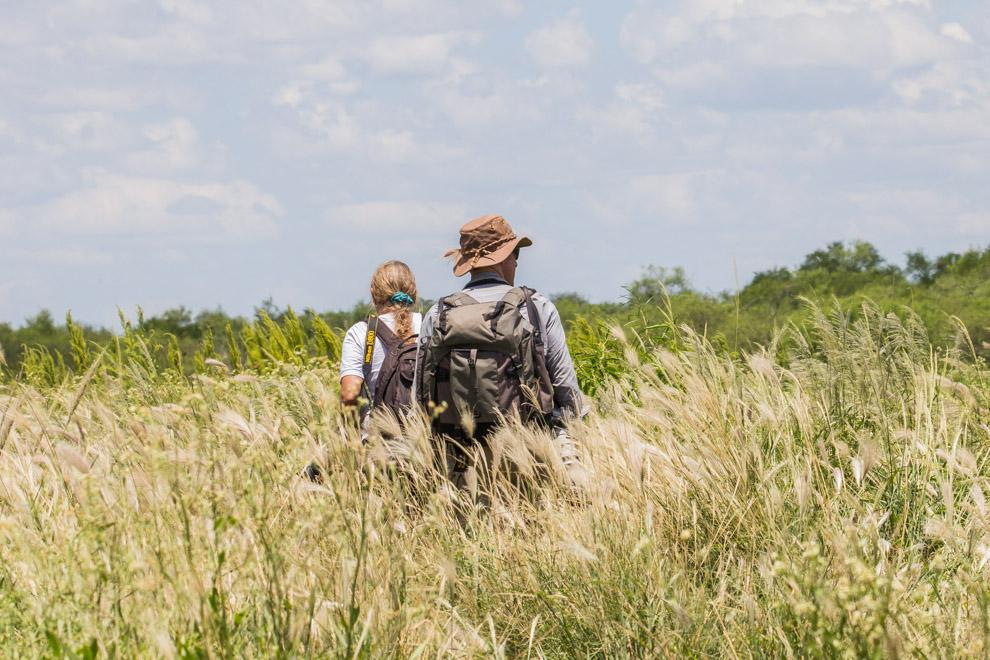 Sabine Vinke (Paraguay) y Nick Baker (Reino Unido) se adentran en los pastizales del chaco paraguayo en busca de especies interesantes, a Nick le sorprendió ver algunas especies que no es común en otros países como nuestros reptiles y cotorras que hacen nidos colectivos. (Tetsu Espósito)