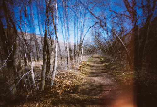 trees abstract 120 film nature analog forest mediumformat landscape utah spring doubleexposure saltlakecity fujifilm pinholecamera pinholephotography ondu redbuttegarden fujifilmnps160 ondupinhole ondu6x12multiformatpinhole
