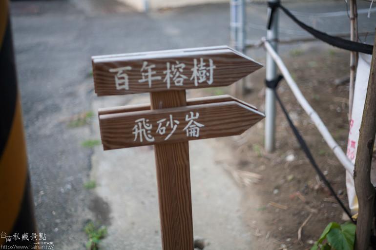 台南私藏景點--西港金砂里花旗木 (22)