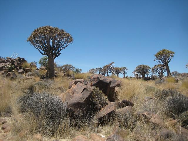 Деревья и камни