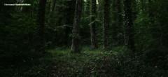 森の魂 - L'anima del bosco