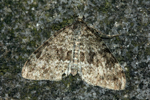 Grey Mountain Carpet 0819