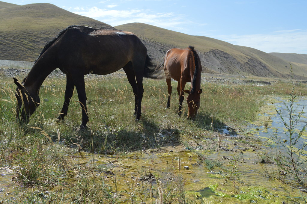 Horses in Kyrgyzstan mountains