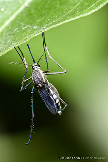 Mosquitoes? Check the EWG Bug Repellent Guide