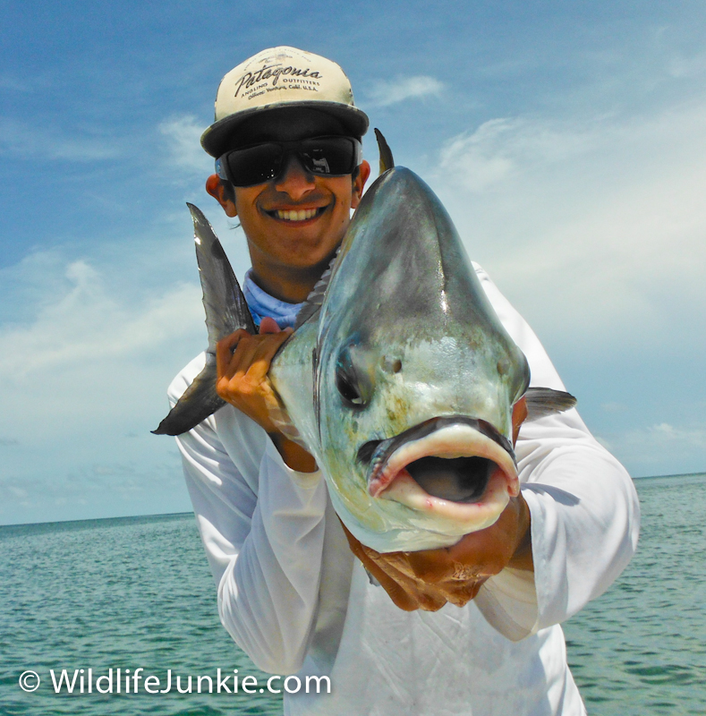 Permit in Biscayne Bay
