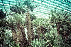 arecales, botanical garden, palm family, tree, plant, flora, vegetation,