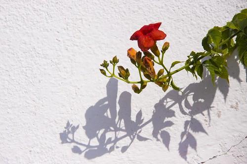 verano en flor by atxu