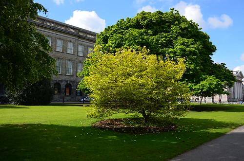 Herrlicher Baum auf grünem Rasen