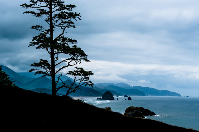 Vista with Tree, Ecola
