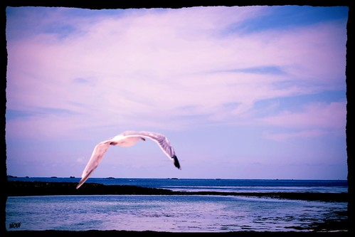 by birdy