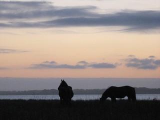 Three wild stallions