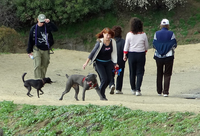 dog-walkers-runyon-canyon