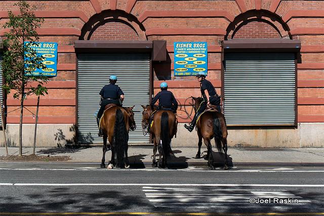 NYPD Horses