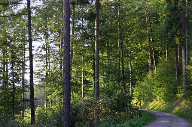 Bosque gigantesco camino de la casita de Heidi en Maienfeld