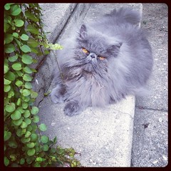(Urban) jungle cat #vincentvictorvonfluffnstuff