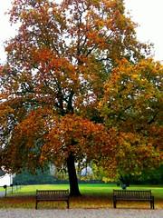 Big tree in autumn