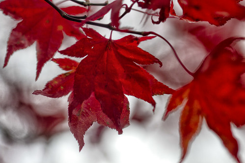 11-13 fall-9502-Edit-29